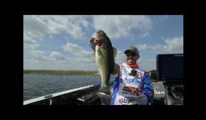 Sqwincher Major League Fishing 2020